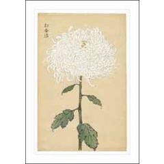wenskaart woodmansterne ashmolean - witte chrysant
