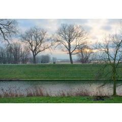 wenskaart eye-comm - bomen bij water en zon