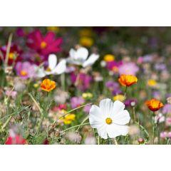 wenskaart eye-comm - bloemenweide