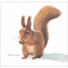 wenskaart - eekhoorn