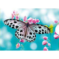 wenskaart met schuifsysteem - vlinder