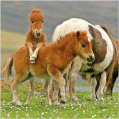 wenskaart rapture - pony
