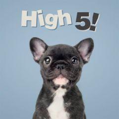 wenskaart 3D - studio pets - high 5!