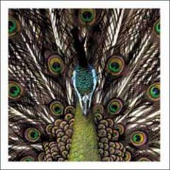 wenskaart woodmansterne - pauw