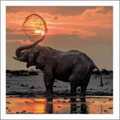 wenskaart woodmansterne - olifant