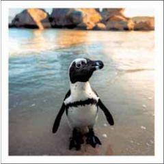 wenskaart woodmansterne - pinguin op strand
