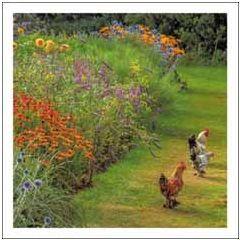 wenskaart woodmansterne - kippen in de tuin