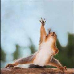 wenskaart woodmansterne - eekhoorn doet aerobics