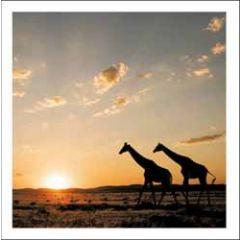 wenskaart woodmansterne - giraffes bij zonsondergang