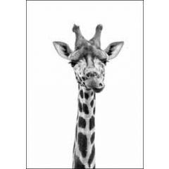 wenskaart woodmansterne - giraffe