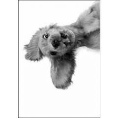 wenskaart woodmansterne - hond