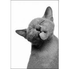 wenskaart woodmansterne - kat