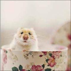 wenskaart woodmansterne - hamster in theekop