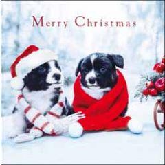 5 kerstkaarten woodmansterne - merry christmas - honden in de sneeuw