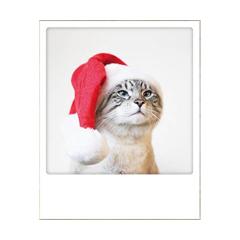 kerstansichtkaart instagram - kat met kerstmuts