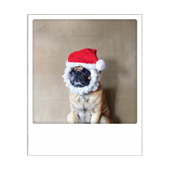 kerstansichtkaart instagram - christmas puppy