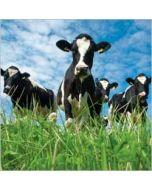 wenskaart rapture - koeien