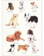 wenskaart clanna cards - puppies honden