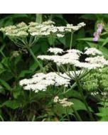 bloemenkaart - witte bloemen