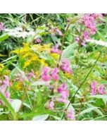 bloemenkaart - bloemenweide