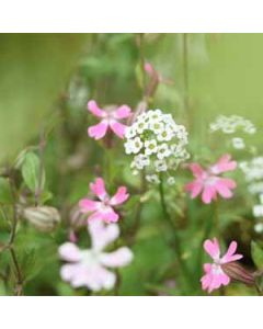 bloemenkaart muller wenskaarten - witte en roze bloempjes