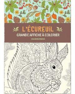 kleurposter A2 gwenaelle trolez - eekhoorn