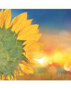 wenskaart second nature - zonnebloem
