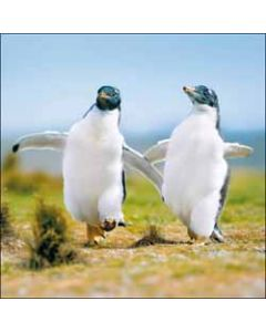 wenskaart woodmansterne - pinguins