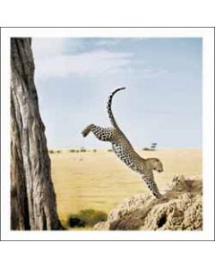 wenskaart woodmansterne - luipaard