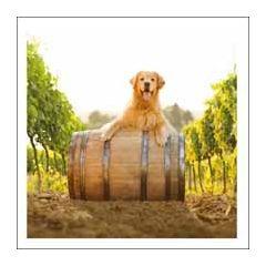 wenskaart woodmansterne - red the life of the party - hond in wijngaard op wijnvat