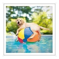 wenskaart woodmansterne - ducky the pool boy - hond met strandbal in zwembad