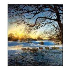 5 kerstkaarten woodmansterne - winterlandschap met schapen