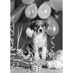 ansichtkaart  zwart-wit 1960 - hond viert feest