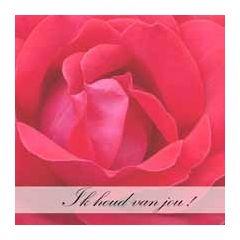 bloemenkaart muller wenskaarten - ik houd van jou! - rode roos