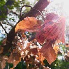 wenskaart - herfst beukennootjes