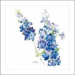 bloemenkaart  woodmansterne - ridderspoor delphinium