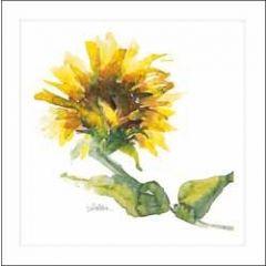 bloemenkaart  woodmansterne - zonnebloem