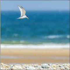 wenskaart woodmansterne - meeuw boven strand