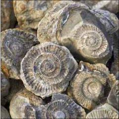 wenskaart woodmansterne - fossielen