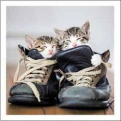 wenskaart woodmansterne - kittens in laarzen
