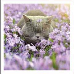 wenskaart woodmansterne - kat tussen bloemen