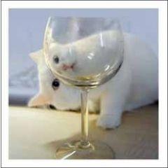 wenskaart woodmansterne - kat kijkt door glas