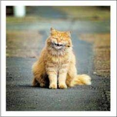wenskaart woodmansterne - te grappig voor woorden - lachende kat