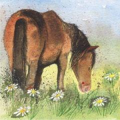wenskaart alex clark - paard