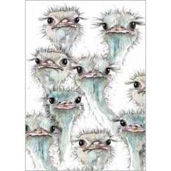 wenskaart  cath ward - struisvogels