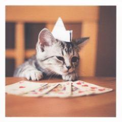 wenskaart woodmansterne - kat speelt kaart