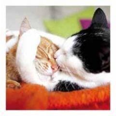 wenskaart woodmansterne - katten