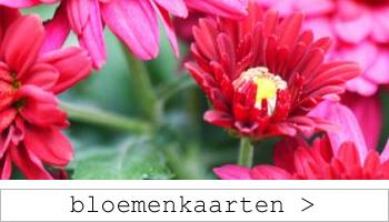 bloemenkaarten
